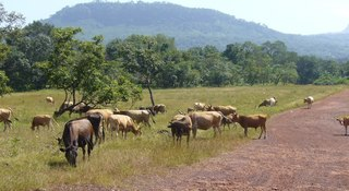 Telimele in Guinea: general information, weather, map, photo and video